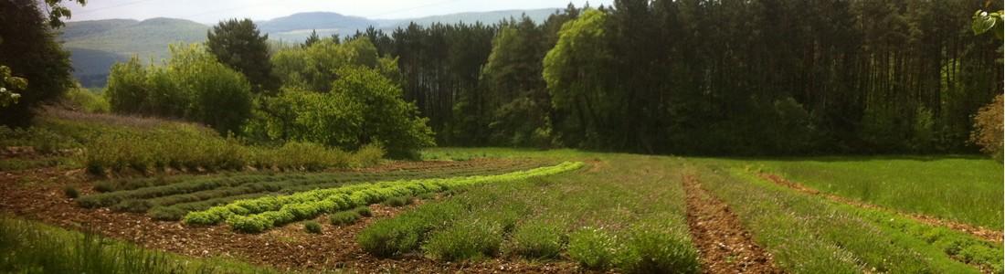 Site de cultures à Baulme-la-Roche